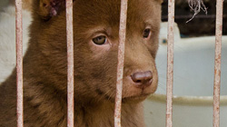 dog-meat-trade-video-thumbnail